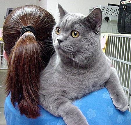 Fun Cat Boarding Services in Dallas | Cat Connection
